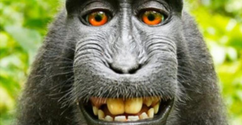 Photographer Settles 'Monkey Selfie' Legal Fight