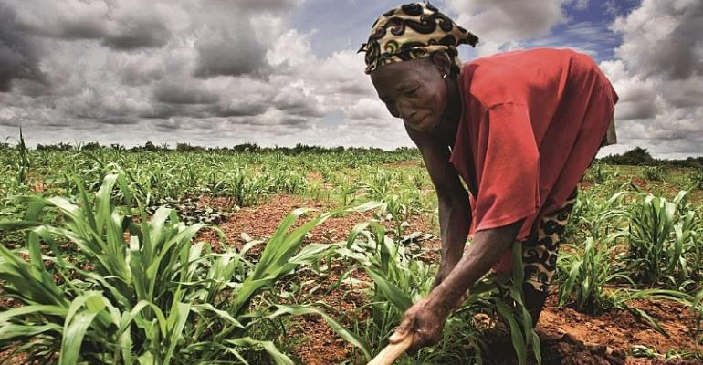 NGOs Are Causing Africa's Agriculture To Stagnate