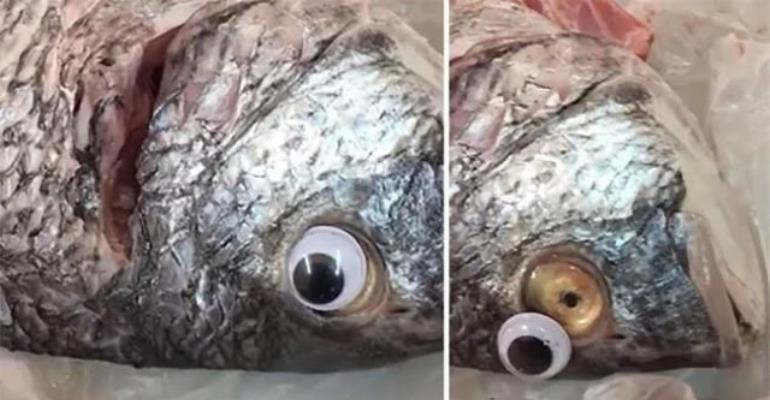 Fish Shop Sticks Plastic Eyes On Fish To Make Them Look Fresher