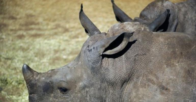 Last year poachers killed 448 rhinos in South Africa, up from 333 in 2010 and just 13 in 2007.  By Stephane de Sakutin (AFP/File)