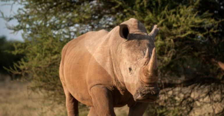 Africa poaching now a war, task force warns