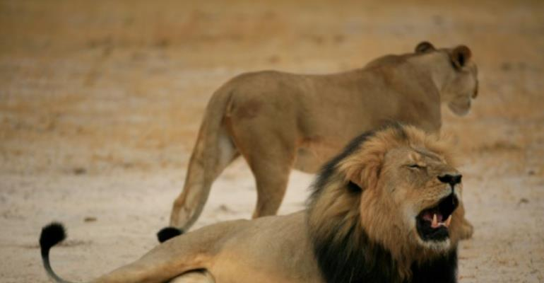 Researchers mourn killing of Cecil the lion\'s cub