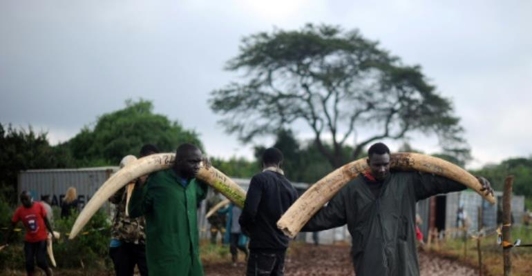 Elephants in east Africa have learned to travel at night and hide during the day to avoid poachers who are hunting tuskers into extinction, researchers say.  By TONY KARUMBA (AFP/File)