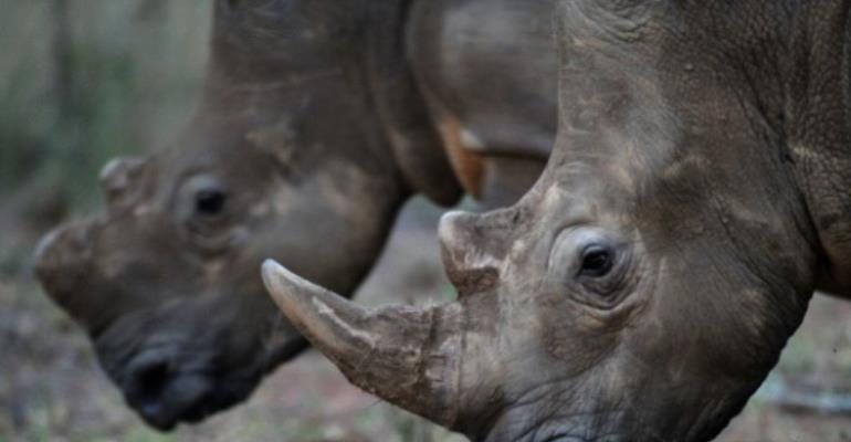 Poachers have killed more than 7,100 rhinos across Africa over the past decade.  By ALEXANDER JOE (AFP/File)