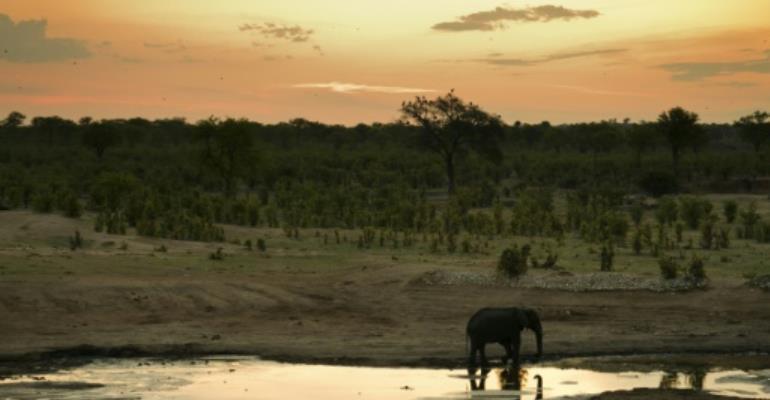 Trump reverses elephant trophy decision, keeps ban