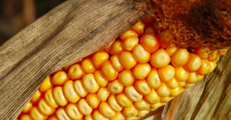 Brazil Won't Buy U.S. GMO Corn, Highlights Worldwide Divide Over GMOs