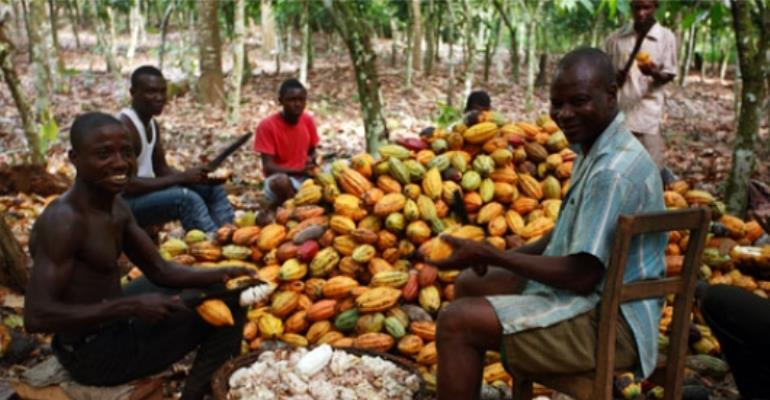 'Stop falsification of  cocoa weighing scales'