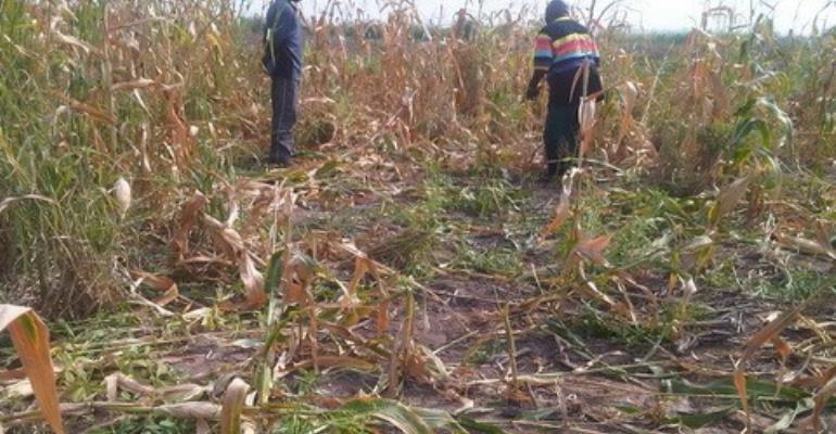 MP declares shoot to kill in Agogo