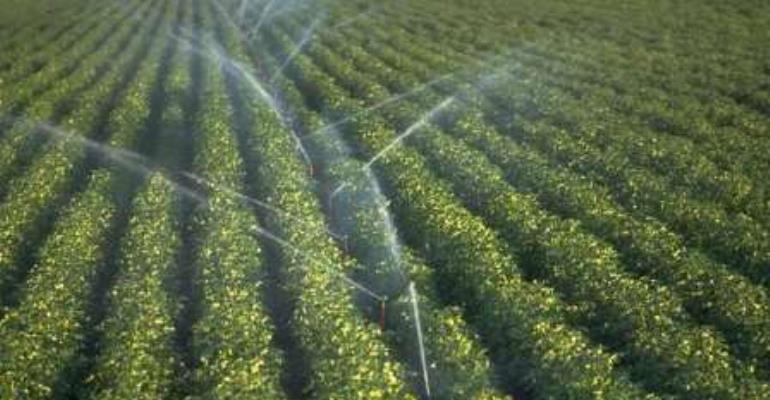 Lack of irrigation facility, a major challenge to farmers at Sugudi