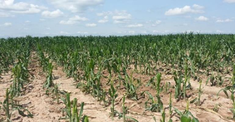 Advocacy group calls for moratorium on genetically modified foods