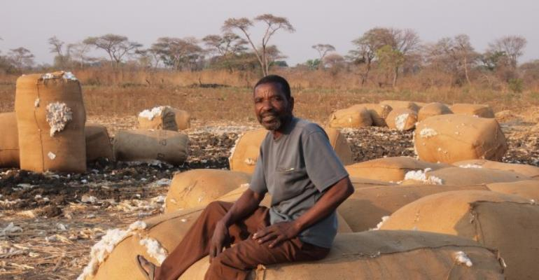 GM Cotton a False Promise for Africa