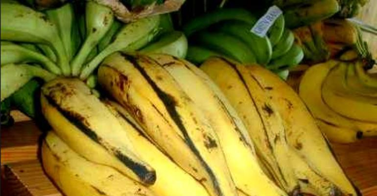 US Human Trials Of GM Banana For Africa Widely Condemned