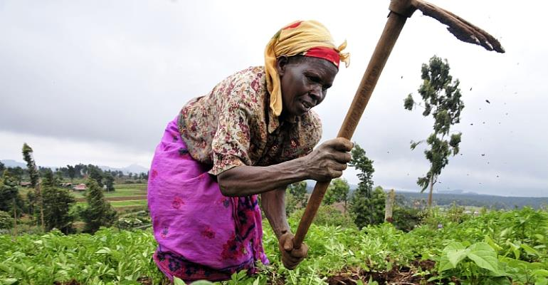 Traditional Farming Sacrificed To Foreign Seed Companies - AFSA