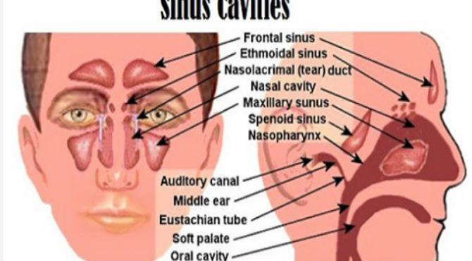 Augmentin For Sinus Infection How Long