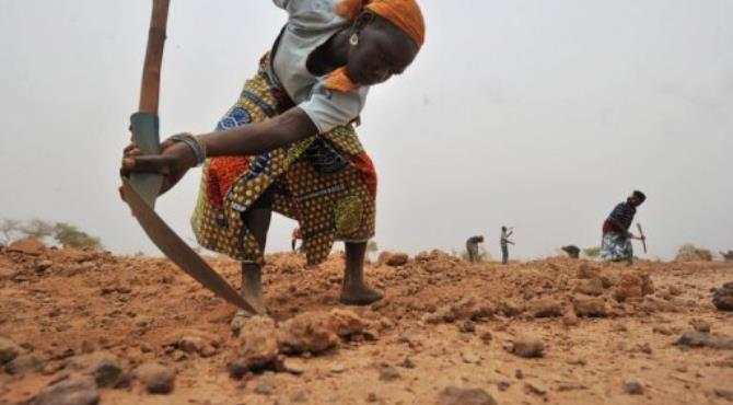 A young woman works the stony soil to dig holes shaped like half-moons, three metres wide and 50 centimetres deep.  By Issouf Sanogo (AFP/File)