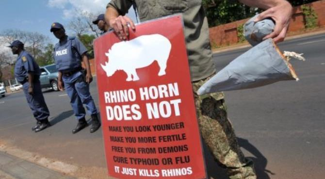 A South African protester holds a sign and a fake rhino horn during a demonstration.  By Alexander Joe (AFP/File)