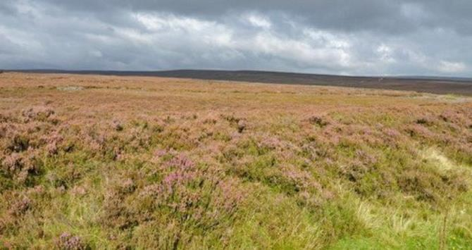 The North York Moors is the largest continuous area of heather moorland in England. (Richard Sowersby / BBC)