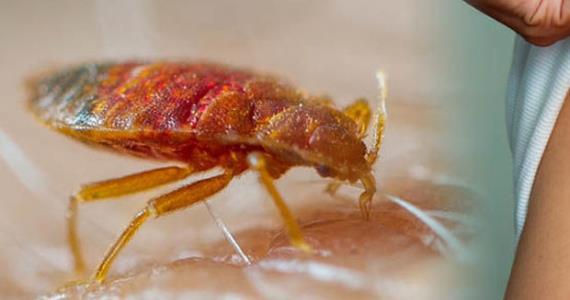 Authorities Say 'No Bedbugs' At Effia-Nkwanta Hospital