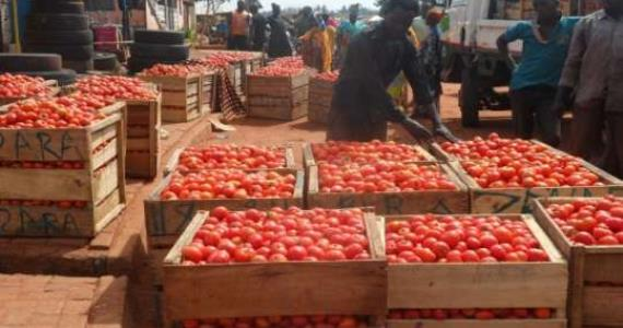 56 Billion CFA Lost Every Year Due To Tomato Importation