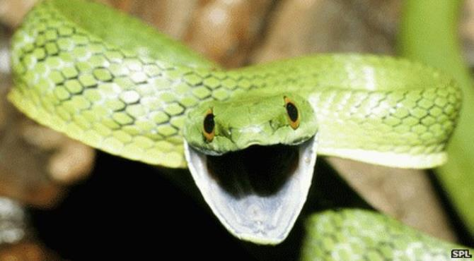 Venomous reptiles may provide a good source for new drugs for human diseases, researchers in Liverpool say.