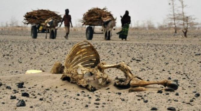 File picture shows residents of Kenya's Wajir border region walking past carcasses of livestock.  By Simon Maina (AFP/File)