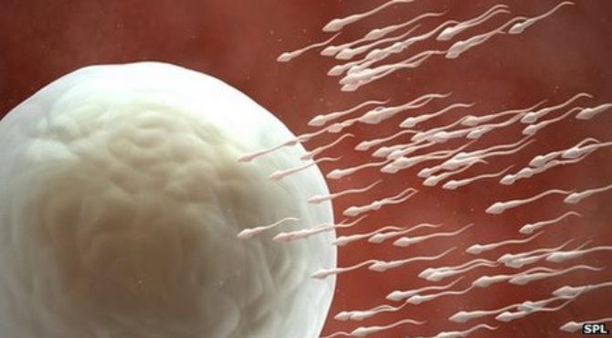 Scientists believe they are a step closer in the difficult journey towards developing a male contraceptive pill, after successful studies in mice.