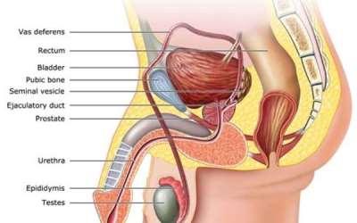 tumore prostata testosterone symptoms