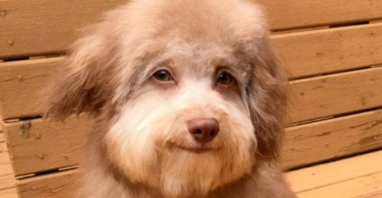 Dog With Human-Like Eyes, Smile Trending