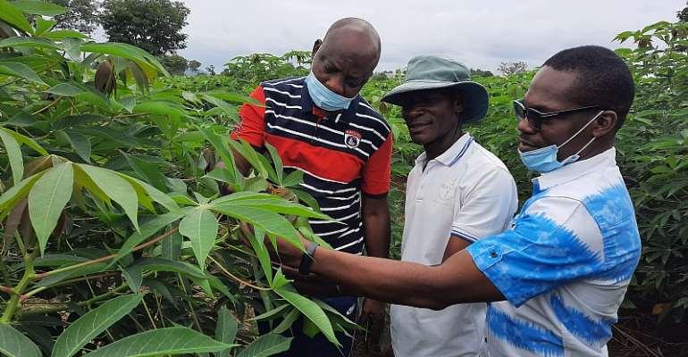 L-R: Prof. Lateef Sanni, BASICS-II Project Leader, IITA; Mr. Ajayi Ikpemige, Seed Producer with Wadahi Farms in Kogi; and Mr Oluwatosin Oni, Senior Program Manager with CRS, on the field admiring Farmer's Pride cassava variety… in Kogi