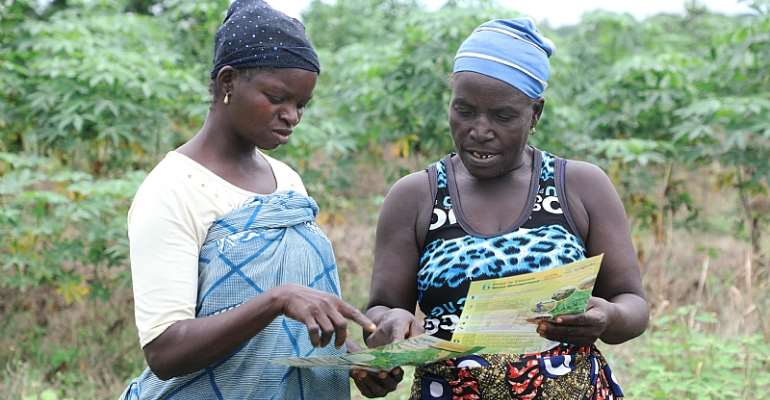 'Six Steps' Toolkit Sparks Excitement Among Cassava Farmers