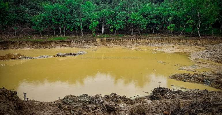Amenfi Central: Farmers Weep As Galamsey Activities Continue To Destroy Cocoa Farms