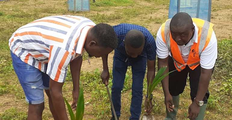 Coconut Project Begins On Reclaimed Land At Akyem Kobriso