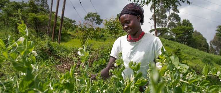 AfDB Seeks Global Support For Africa's Young Farmers