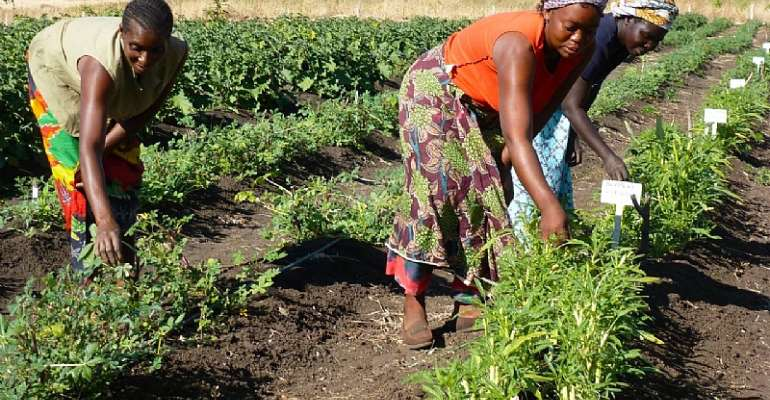 Agric Industry Alliance Supports Govt's New Pesticide Legislation