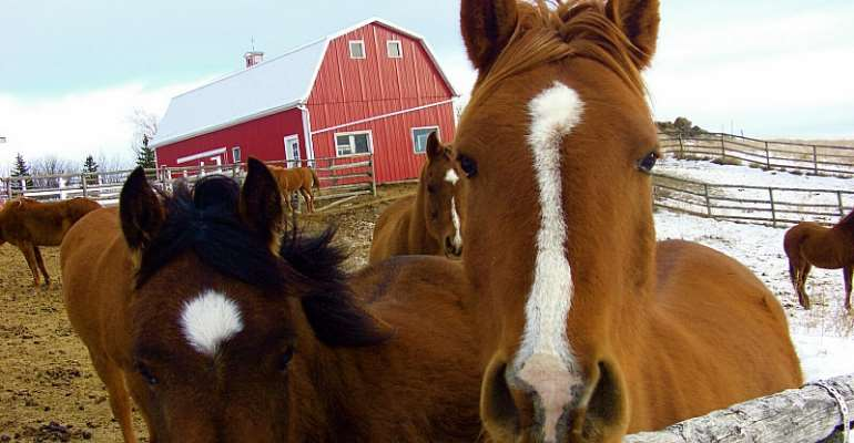 Equine Hypocrisies: Race Horses for the Knackery