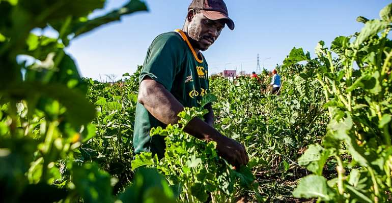 Small-scale farming creates more jobs in South Africa.This one is in Soweto, Johannesburg.   - Source: Sharon Seretlo/Gallo Images/Getty Images