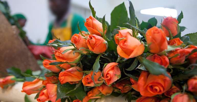 Kenyan flower exports to Europe fell 50%, affecting about 1 million people. - Source: Getty Images