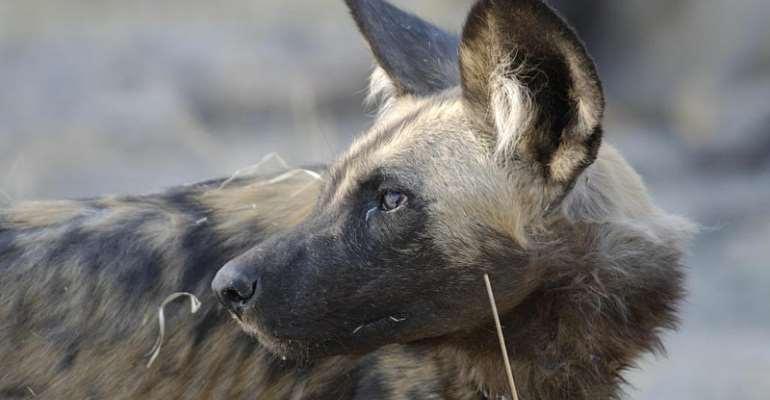 Botswana Predator Conservation Trust