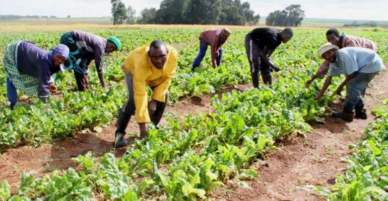 Intensive agriculture can meet the ever-increasing demand for food supplies, photo credit: Africanfarming.com