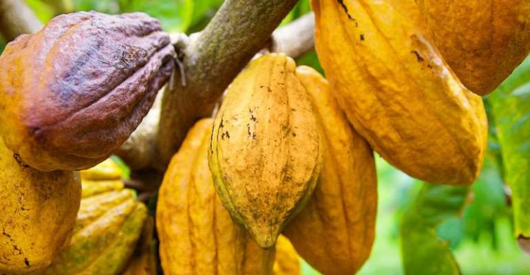 Gov't To Launch Cocoa Forests Redd Plus Program