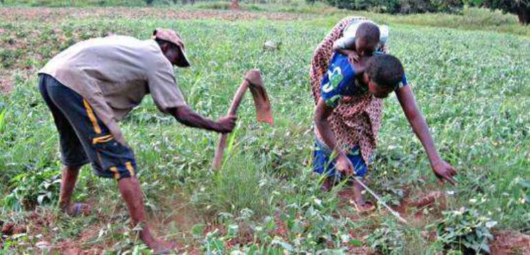 Building On Indigenous Knowledge For Better Agricultural Policies