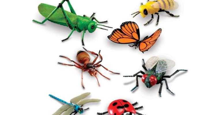 Our Vanishing World: Insects