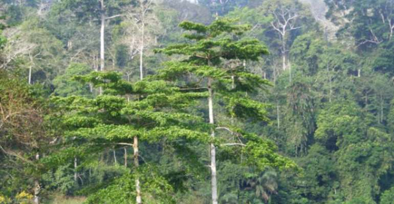 Atewa Forest Identified As A No-Go Area For Bank Financing Of Damaging Developments