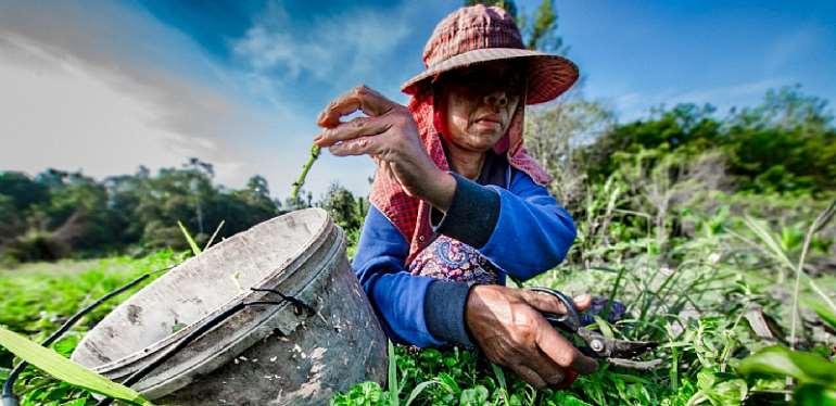Dutch funding to IFAD will help avert COVID-19 food crisis