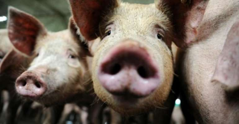 China claims pork from France infected with traces of Covid-19