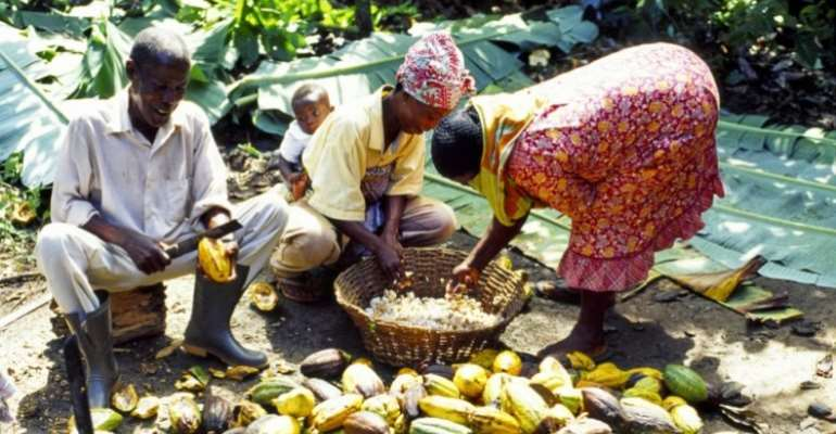 Cocoa farmers adopt technological strategies to fight crime