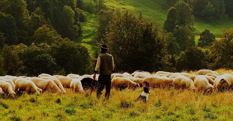 Are You A Good, Trustworthy Shepherd