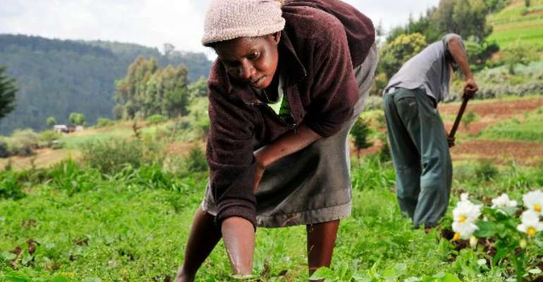 Peasant Farmers Unhappy With Gov't For Rejecting In-kind Repayment For Input Support