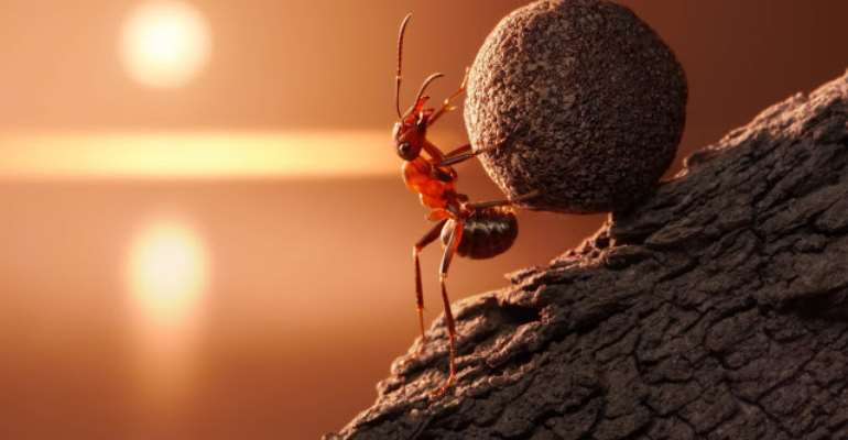 Ants are the smallest creatures that can move objects larger than their body weight