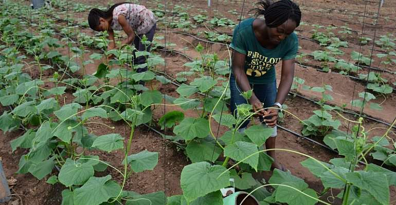 40,000 Young People In Nigeria To Benefit From Young Africa Works---IITA Project Training Program